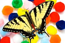 Colorful Butterfly Background Stock Photography