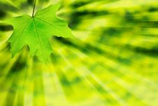 Free Green Leaf Stock Images - 8482694