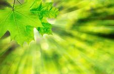 Free Green Leaf Stock Photos - 8482733