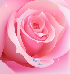 Free Rose Stock Photos - 8482803