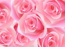 Free Rose Stock Photos - 8482863