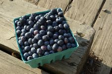 Free Blueberries In Pint Bucket Royalty Free Stock Photo - 8483225