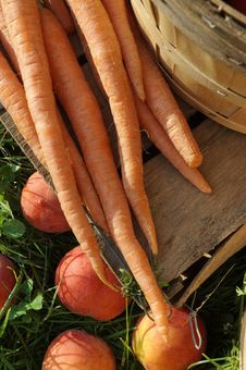 Free Fresh Carrots And Peaches Stock Image - 8483241