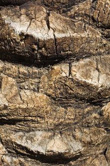 Free Palm Tree Bark Stock Images - 8483324