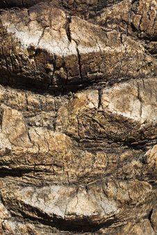 Free Palm Tree Bark Stock Images - 8483324