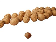 Free Walnuts In A Row Royalty Free Stock Images - 8484379