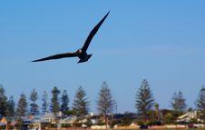 Free Semaphore Seabird Stock Photography - 8484612