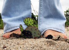Free Sandy Cactus Royalty Free Stock Photos - 8484808