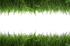 Free Frame Background With Green Grass Royalty Free Stock Photography - 8484907