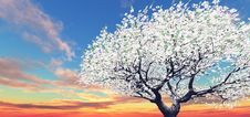 Free Blossoming Tree In The Sunset Stock Photo - 8485510