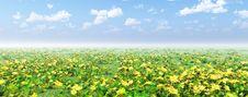 Free Beautiful Flowers Stock Photo - 8485680