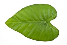 Free Green Leaf Royalty Free Stock Images - 8485779