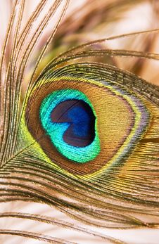 Free Peacock Eye Stock Photography - 8486222