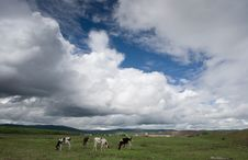 Free Hulunbeier Grassland Royalty Free Stock Photos - 8486798