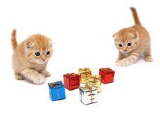 The Kittens Stock Image