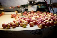 Apple Washing Stock Photo