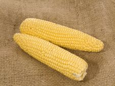 Free Corn Royalty Free Stock Images - 8489419