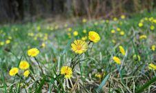Free Yellow Blooms Stock Photos - 84898573