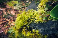 Free Moss Among Rocks And Bark Stock Images - 84899324