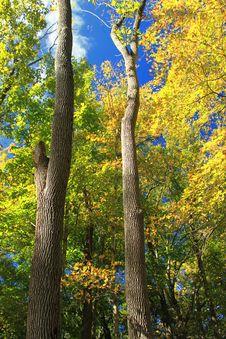 Free Early Autumn &x28;4&x29; Royalty Free Stock Photo - 84899615