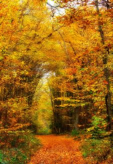 Free Path Through Autumn Woods Stock Photos - 84899893