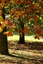 Free Autumn In A French Park Stock Photo - 8490420