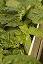 Free Fresh Vegetable Market Stock Photos - 8491733