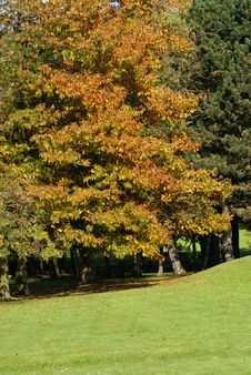 Free Autumn In A French Park Stock Images - 8490124