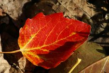 Free Autumn In A French Park Royalty Free Stock Photos - 8490568