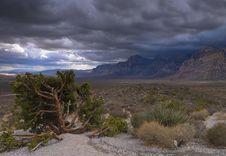 Nevada Desert Stock Photos