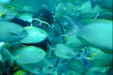 Free A Diver Feeding Tropical Fish In A Caisson Stock Photo - 8491750