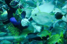 Free A Diver Feeding Tropical Fish In A Caisson Stock Photos - 8491763