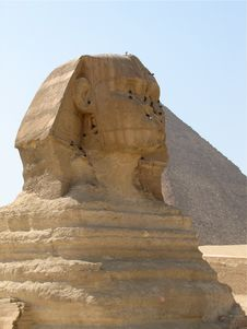Free Sphinx Royalty Free Stock Images - 8492119