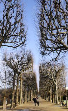 Free Street With Tree Stock Photo - 8492360