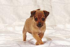 Free Little Dog Stock Photos - 8492563