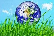 Free Earth Globe In Green Grass Stock Image - 8495191