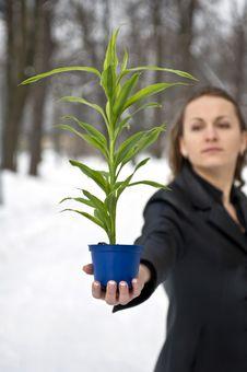 Free Green Plant Stock Photos - 8496223
