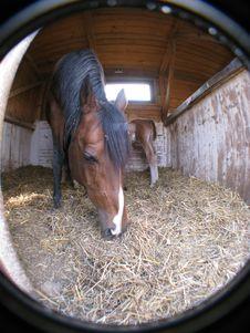 Free Horse Stock Photos - 8498063