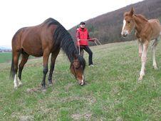 Free Horse Royalty Free Stock Photo - 8498135