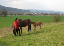 Free Horse Stock Photo - 8498200