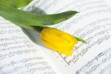 Free Yellow Tulip. Royalty Free Stock Image - 8498316