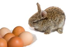 Free Bunny And Easter Eggs Royalty Free Stock Photography - 8498737
