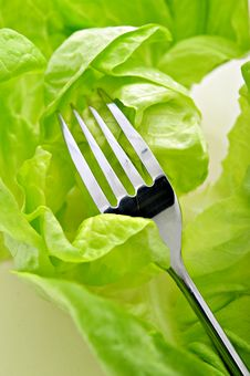 Free Salad And Fork Royalty Free Stock Images - 8499739