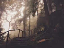 Free Steps And Rail In Hazy Park Royalty Free Stock Photography - 84900217