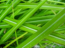 Free Green Grass Blades Stock Photos - 84900553