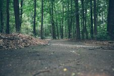 Free Path In Green Forest Stock Photography - 84900752