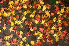 Free Colorful Leaves 2 Stock Image - 84902391