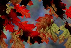 Free Autumn Hues. Stock Photography - 84903072
