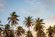 Free Palm Trees Background Stock Photo - 84903180