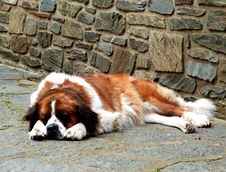 Free Dog Napping Outdoors Royalty Free Stock Photography - 84903197